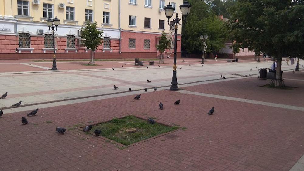 Власти Брянска рассказали о 4 исчезнувших каштанах на бульваре Гагарина