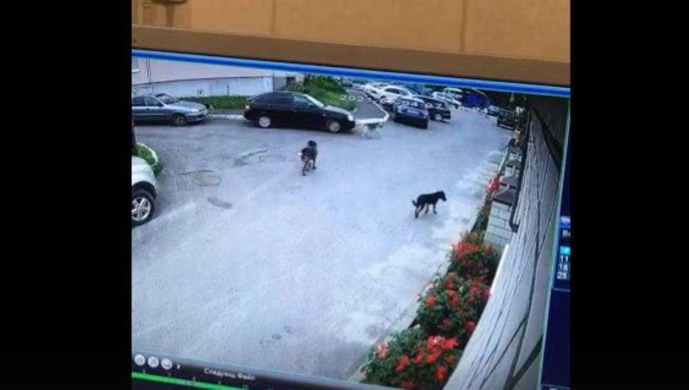 Жителей Брянска возмутила женщина со сворой агрессивных собак