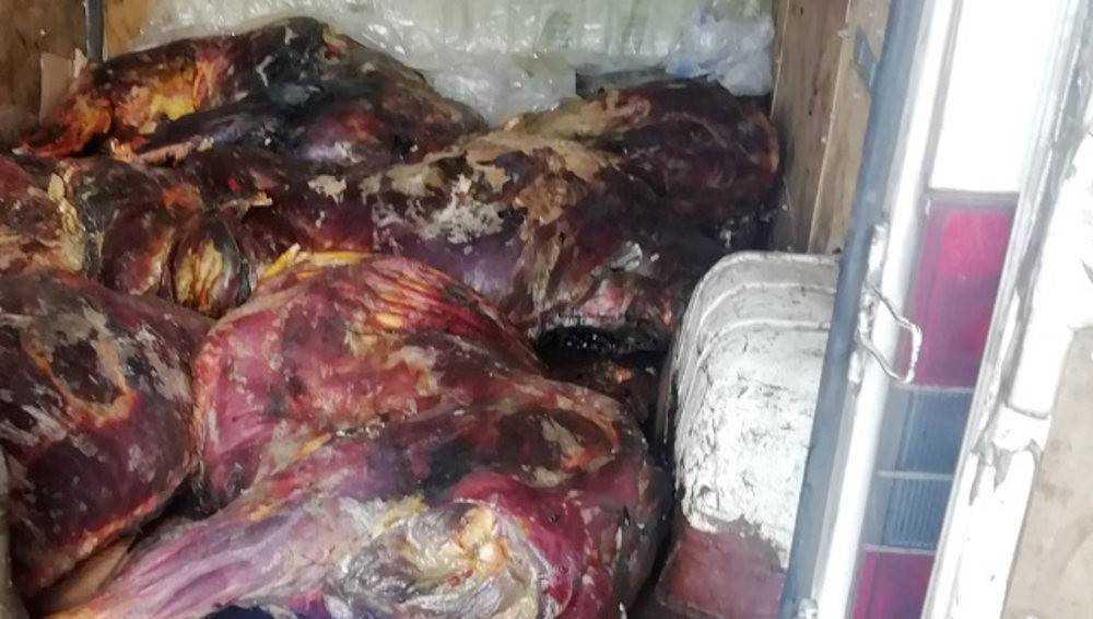 В Брянской области утилизировали 220 килограммов подозрительной говядины