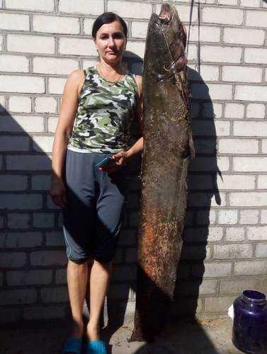 Брянский рыбак поймал в Десне гигантского сома весом в 40 килограммов