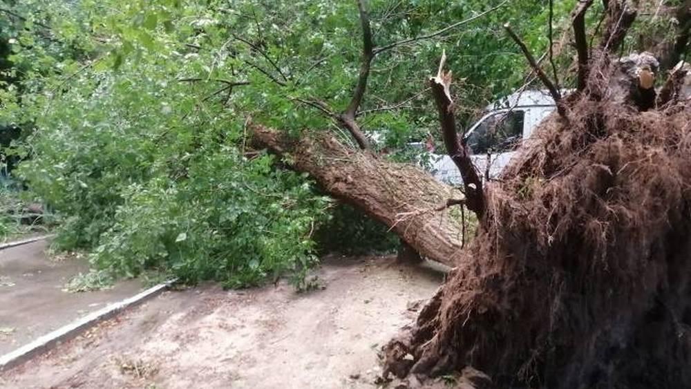 Первый канал рассказал о последствиях урагана в Брянской области