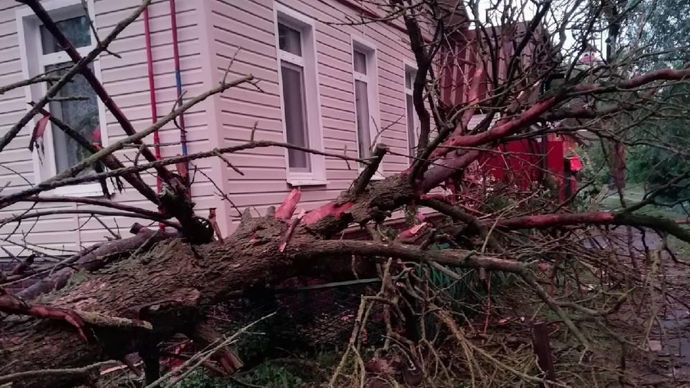 Ураганный ветер во время грозы натворил немало бед в Брянске