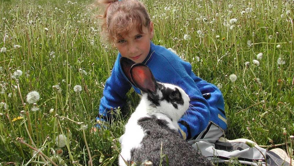 В Брянской области построят за 1,9 миллиарда рублей кролиководческие фермы
