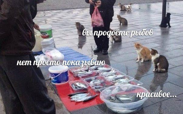 «Вы продоёте рыбов»: брянцы начали распространять популярный мем