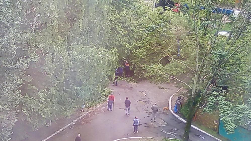 В Брянске во дворе многоэтажного дома на улице Костычева рухнуло дерево