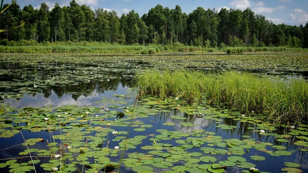 Одолень-трава разрослась до невиданных масштабов в орловских водоемах