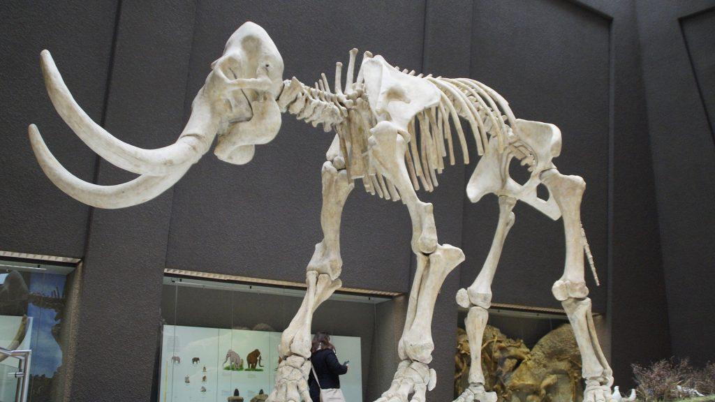 Под Брянском археологи нашли останки мамонтов