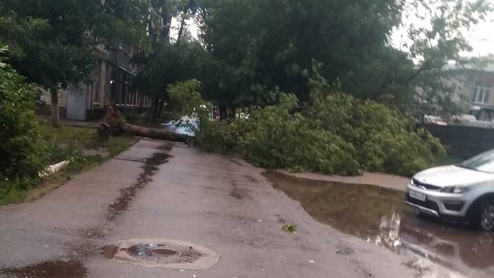 Во время грозы в Брянске ураганный ветер повалил 15 деревьев