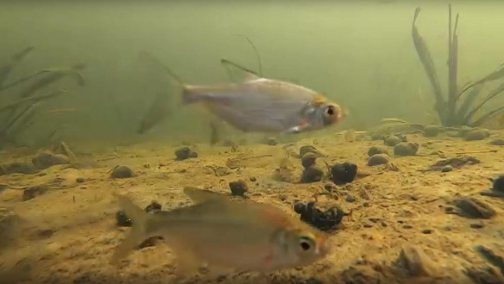 В заповеднике «Брянский лес» сняли фильм о красотах подводного мира реки Неруссы