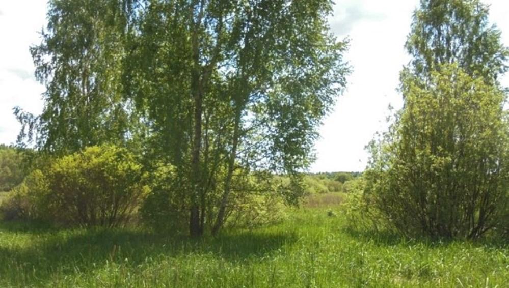 На Брянщине владелицу заросшего сорняками участка оштрафовали на 10000 рублей