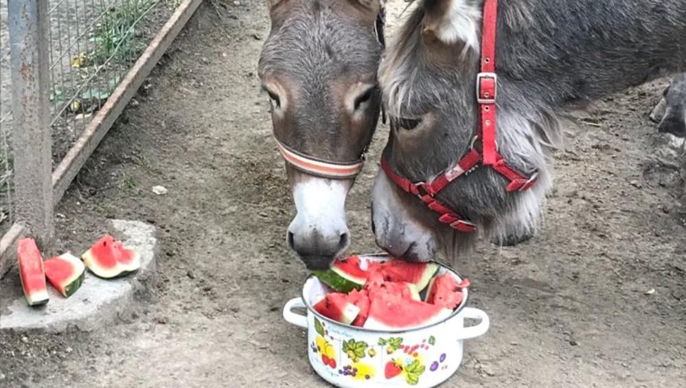 Посетители брянского зоопарка смогут накормить зверей арбузами