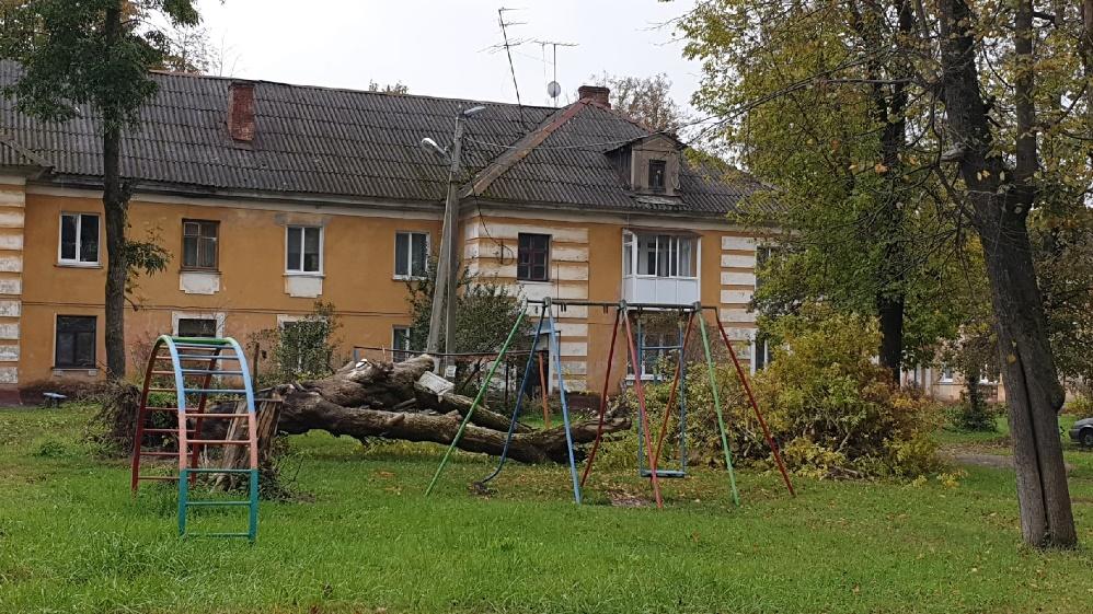 В брянском посёлке Белые Берега сгнившее дерево рухнуло на детскую площадку