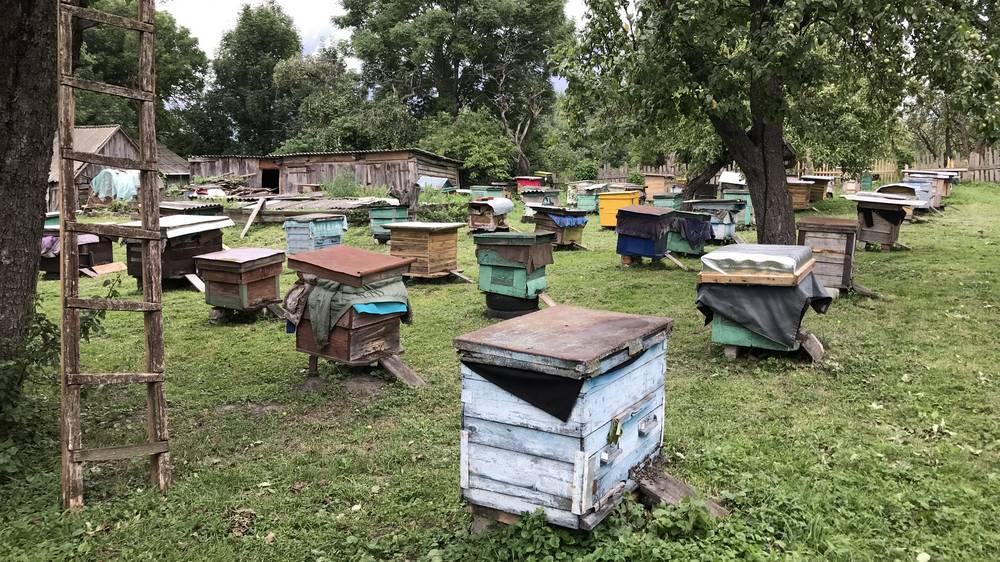 Брянские власти призвали пчеловодов регистрировать свои пасеки