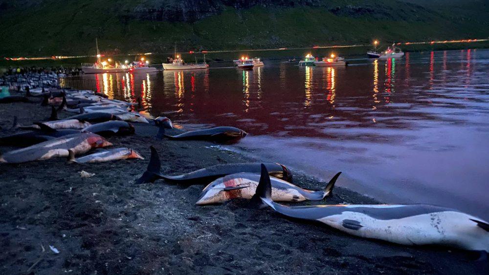 Рыбаки Фарерских островов убили более 1400 дельфинов