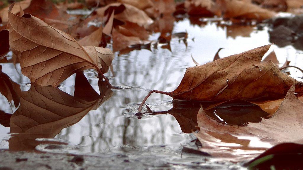 Синоптики предупредили брянцев о сильном похолодании и затяжном дожде