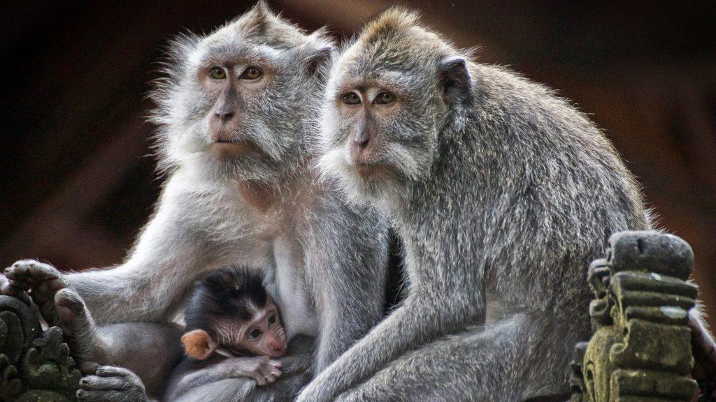 Facebook назвал чернокожих на видео приматами