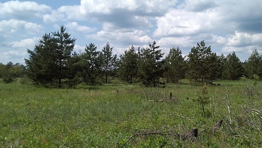 Администрация Суземского района за бурьян на полях оштрафована на 100 тысяч рублей