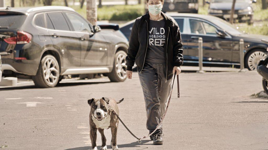 Для выявления заболевших коронавирусом стали использовать собак