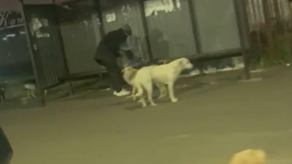 Выяснилось, кто в три часа ночи в Брянске кормит зверей, кусающих людей