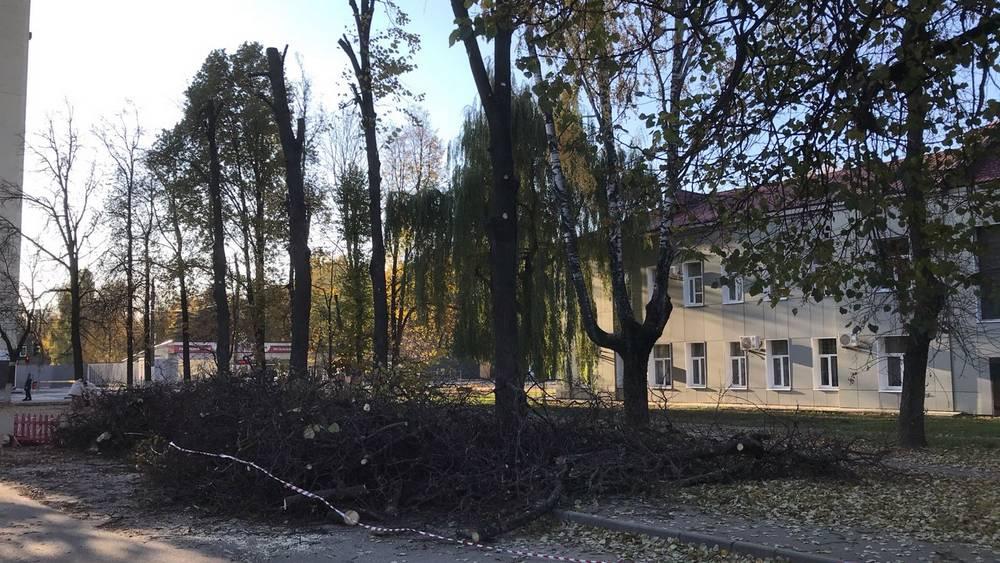 Возле здания брянских следователей провели жесткую обрезку