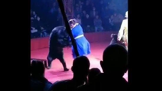 Медведь напал на беременную артистку во время представления в цирке