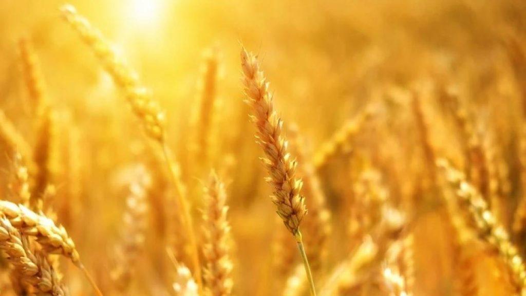 Николай Валуев: «Брянская область получит еще один инструмент для реализации сельскохозяйственной продукции собственниками земельных участков»