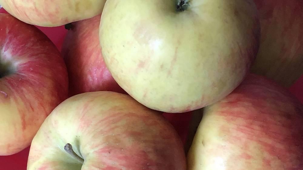 В Крупце Брасовского района в новом саду собрали 150 тонн яблок