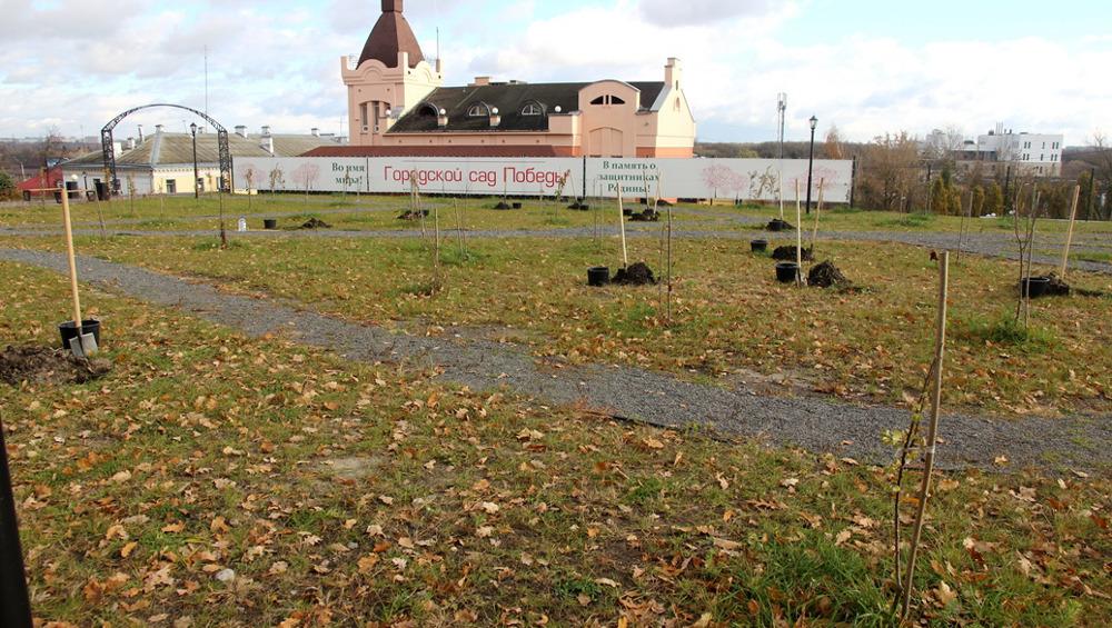 В Брянске дополнительно высадили новые деревья и кустарники в Саду Победы