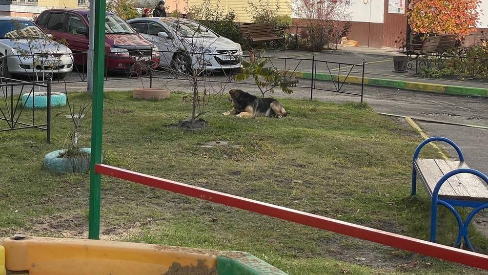 В Брянске на улице Романа Брянского притаились лохматые бандиты