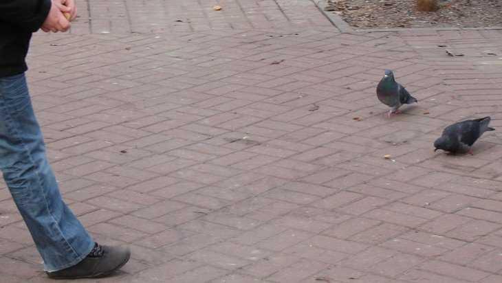 В Брянске неведомый водитель сбил на бульваре ребенка и скрылся