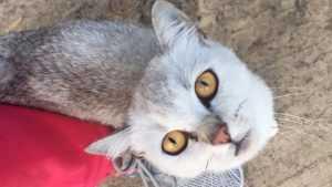 В Новозыбкове велосипедистка спасла от гибели выброшенного в мешке кота