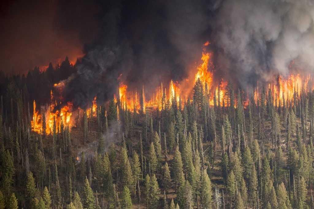 Русскому лесу грозит гибель