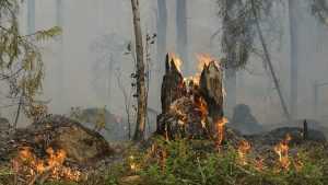 В Брасовском районе Брянской области сгорел участок леса