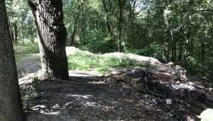 В брянском парке «Соловьи» мусорные контейнеры заменили свалками