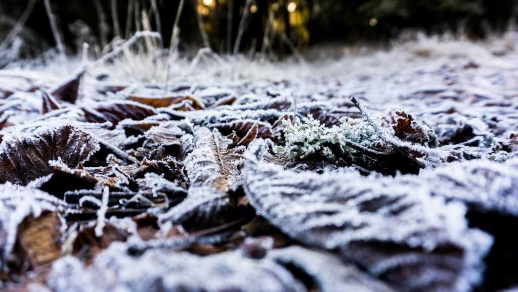В Брянской области похолодает до 8 градусов мороза