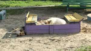 Детские песочницы в Брянске оккупировали стаи собак