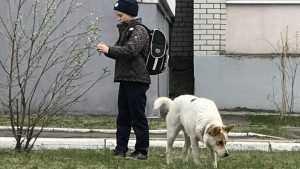 Жителей Новозыбкова наказали за нарушение правил выгула опасных собак