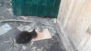 Жители Брянска обнаружили в мусорном контейнере выброшенных котят