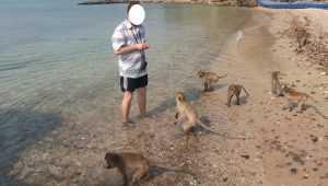 Таиландские обезьяны съели на ура хлеб из Брянска
