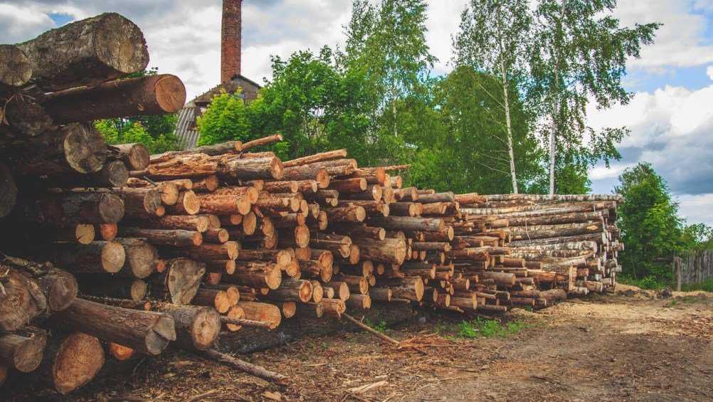 В Климовском районе работника пилорамы оштрафовали за мусор в лесу