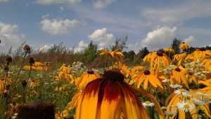 В среду в Брянске обещают грозу и до 30 градусов тепла