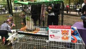На брянском фестивале 17 кошек и собак нашли себе новую семью