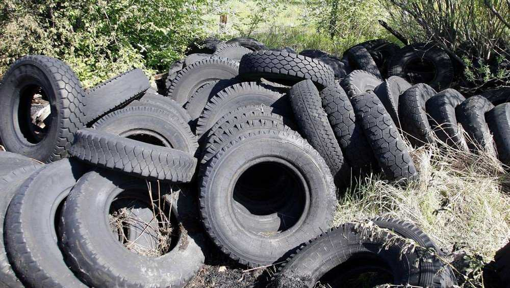 Дятьковскую фирму оштрафовали за беспорядок в лесу