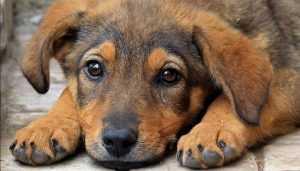 В Брянске возле «Лития» автомобиль покалечил собаку