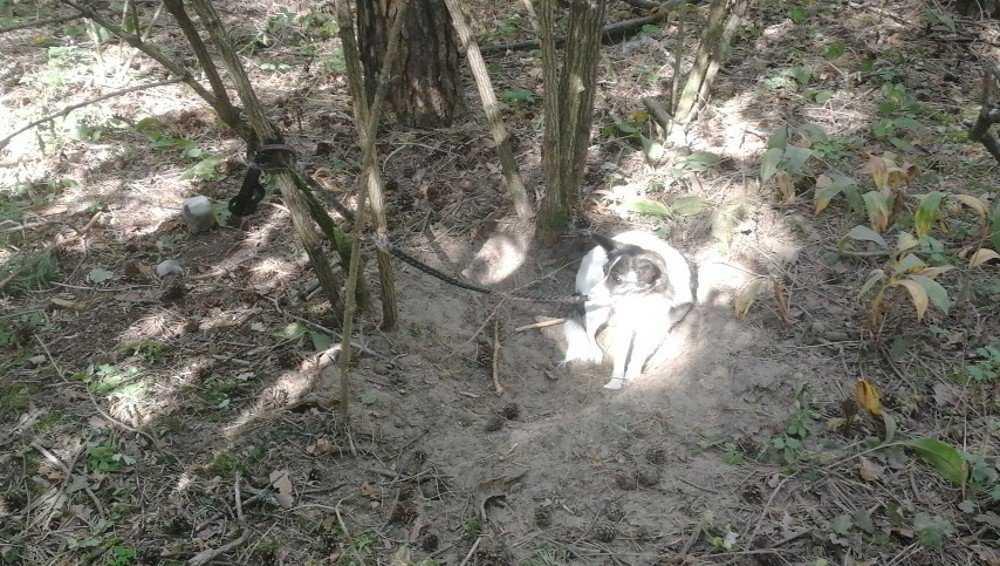 В брянском лесу собаку привязали к дереву и оставили на верную гибель