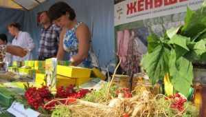 Брянских производителей женьшеня атаковали вымогатели-экологи