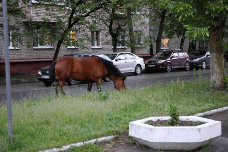 Володарка — лошадиный рай