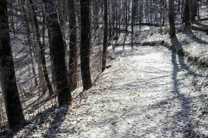 «Соловьи»: брянский Кавказ начинает оживать после зимы