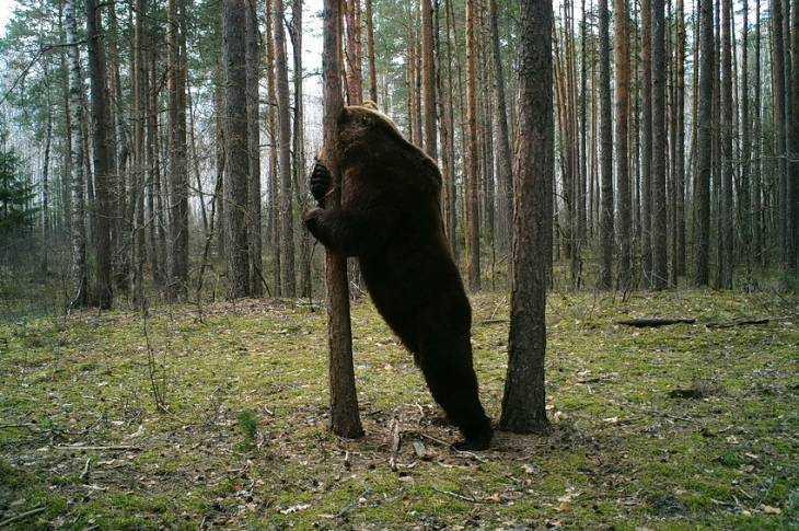 Брянский хранитель леса