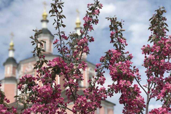Краски весеннего Свенского монастыря